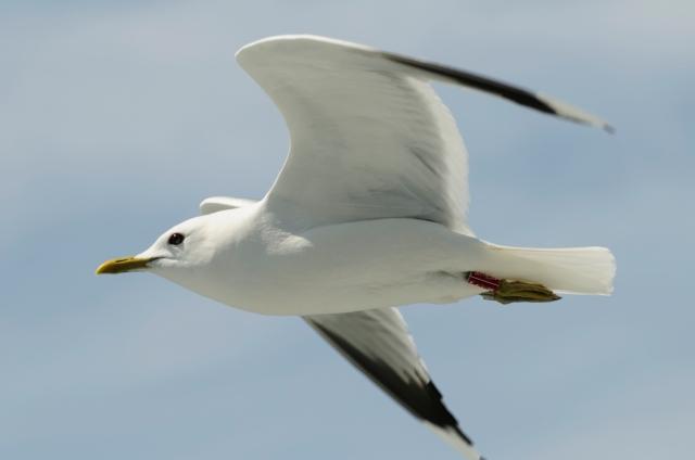 Jonathan Livingston Seagull  (Photo: iStockphoto)