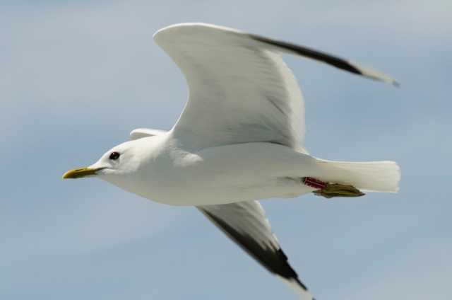 Jonathan Livingston Seagull  (Photo: iStockphoto)
