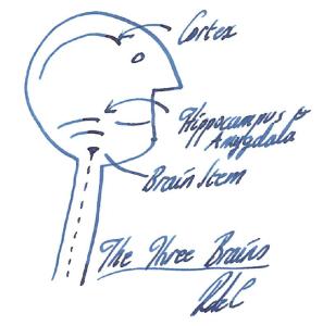The three brains (RDC)